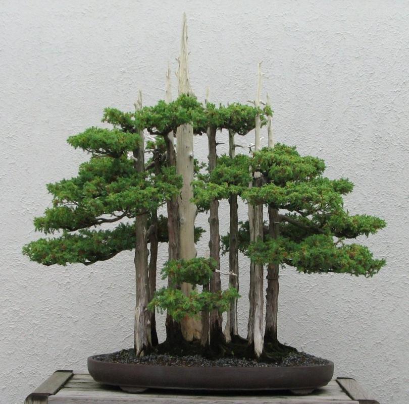 фото дерева китай рулит имеет ничего общего