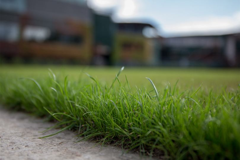 Лучшие сорта травы