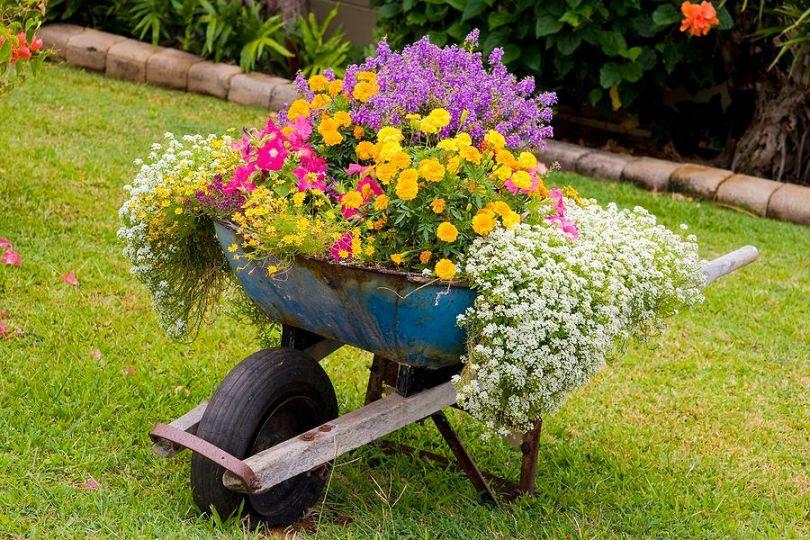 Прямоугольная клумба как оформить цветами