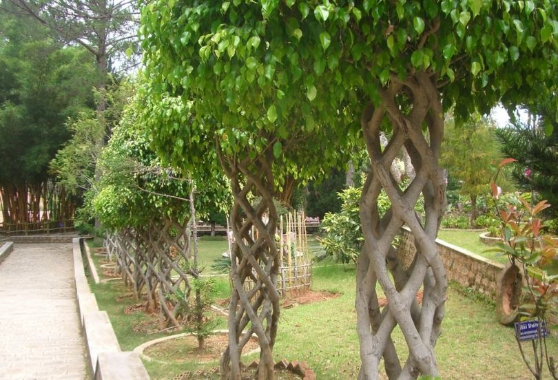 Какое дерево посадить возле дома