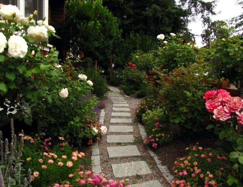 Розы в саду: ландшафтный дизайн участка