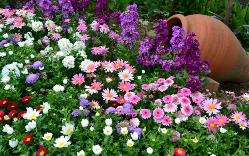 Однолетние и многолетние цветковые растения