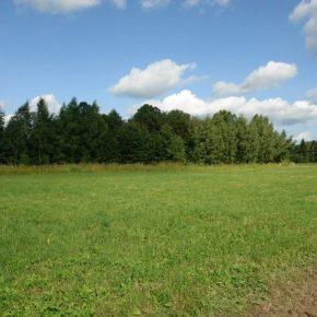 Покупка и проверка земельного участка
